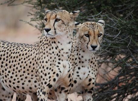 Vrijwilligers op het natuurbehoud project in Botswana kunnen kennismaken met bijzondere wilde dieren
