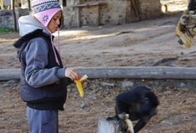 Diergeneeskunde & Dierenverzorging Jongerenreizen: Argentinië