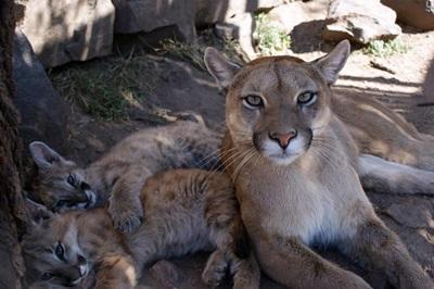 jongerenreis argentinie dierenopvang