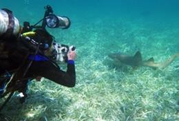 Vrijwilligerswerk in Belize: Natuurbehoud & Milieu
