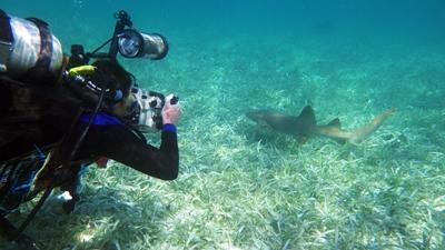 Projects Abroad vrijwilliger duikt in Belize om mee te helpen met onderzoek