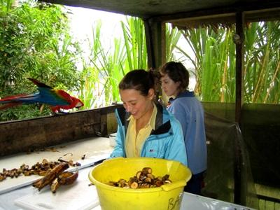 Jongerenreis natuurbehoud project in Peru