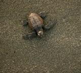 Turtle Data