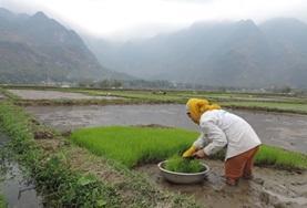 Vrijwilligerswerk in Azië: Vietnam