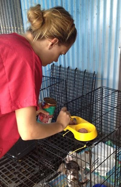 Stage lopen op een dierenverzorging project in het buitenland