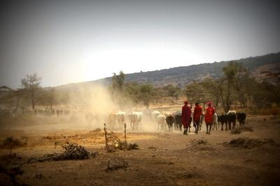 Vrijwilligerswerk Masaai cultuur project in Tanzania