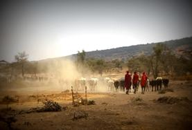Als vrijwilliger maak je kennis met de unieke Maasai cultuur in Tanzania.