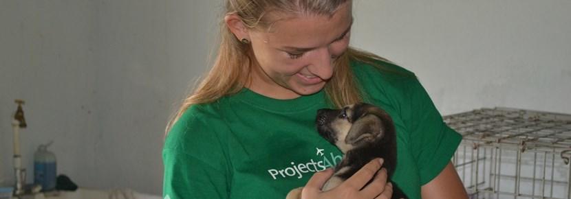 Als je vrijwilligerswerk met dieren in het buitenland doet, kun je bijvoorbeeld helpen bij de zorg voor verwaarloosde honden.