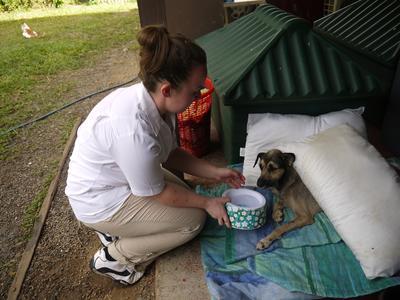 Zorg voor verwaarsloosde dieren tijdens het dierenverzorgingsproject in Belize