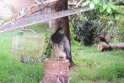 Vrijwilligerswerk Bolivia dierenverzorging