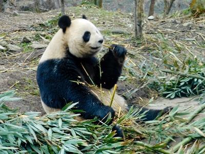 Vrijwilligerswerk op het dierverzorgingsproject in China