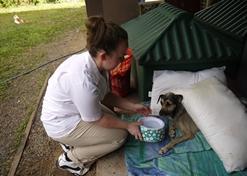 Zorg als vrijwilliger op het dierenverzorgingsproject in Belize voor lokale honden en katten.