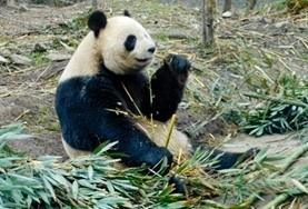 Vrijwilligerswerk met dieren in het buitenland: China