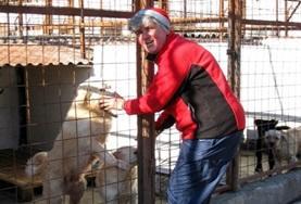 Als je vrijwilligerswerk doet met dieren in Roemenië werk je in een hondenasiel en help je bij de verzorging en behandeling van de honden.