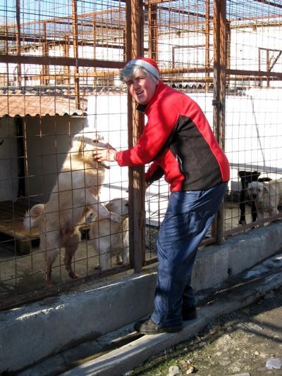 Vrijwilligerswerk dierverzorging in Roemenië