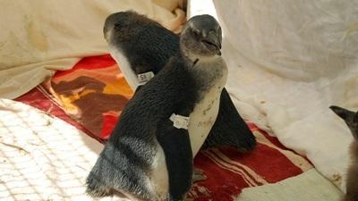 Zeevogels-Zuid-Afrika