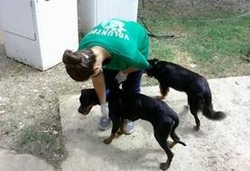 Vrijwilligerswerk met dieren in het buitenland: Jamaica