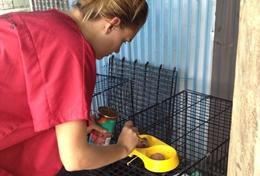 Assisteer als vrijwilliger een lokale dierenarts in Samo bij de behandeling van honden en katten.