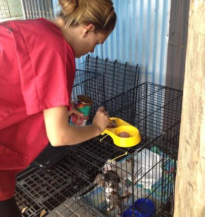 Vrijwilliger op het diergeneeskunde en dierenverzorgingsproject op Samoa