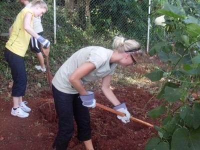Vrijwilligerswerk landbouw project in Jamaica