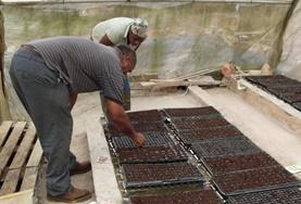 Landbouw projecten in het buitenland: Jamaica