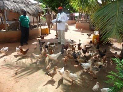Vrijwilligerswerk op het landbouwproject in Togo