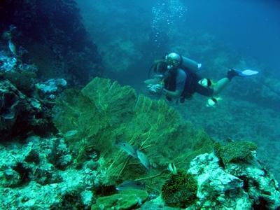 Bescherming van de haaien in Fiji