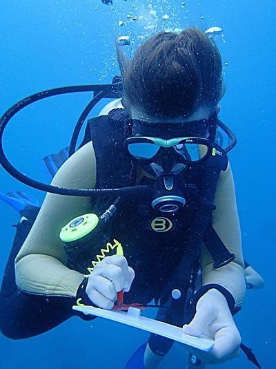 Vrijwilliger verzamelt data op het haaien project