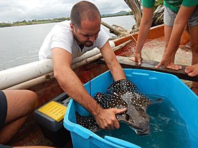 Vrijwilliger doet onderzoek naar haaien