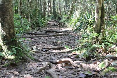 Projects Abroad vrijwilligers helpen mee aan het behoud van de prachtige natuur in Madagaskar op het natuurbehoud project