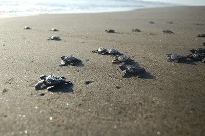 Schildpadden bij het natuurbehoud project