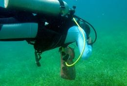 Natuurbehoud & Milieu projecten in het buitenland : Belize