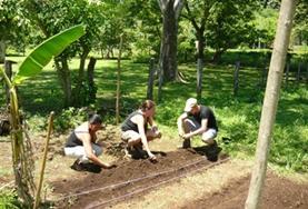 Help bij de bescherming van een natuurpark in Costa Rica door bijvoorbeeld nieuwe inheemse gewassen te planten.