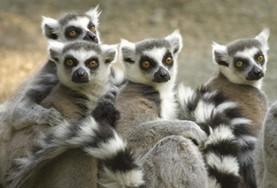 Natuurbehoud & Milieu projecten in het buitenland : Madagaskar