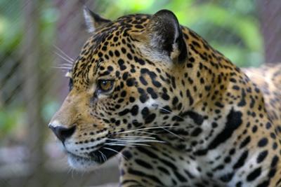 Vrijwilligerswerk natuurbehoud in Peru