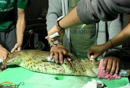 Help lokale dierenartsen bij de behandeling van dieren tijdens dit vrijwilligersproject in peru.