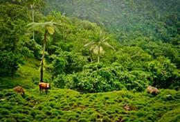 Vrijwilligerswerk met ervaring voor diergeneeskunde: projecten voor professionals: Samoa