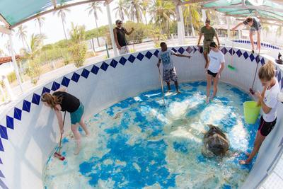 Vrijwilligers helpen tijdens de twintigersreis naar Mexico bij de bescherming van zeeschildpadden. o