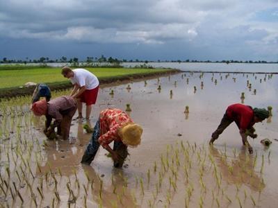 Projects Abroad deelnemers aan het werk op het platteland bij het Khmer project in Cambodja.