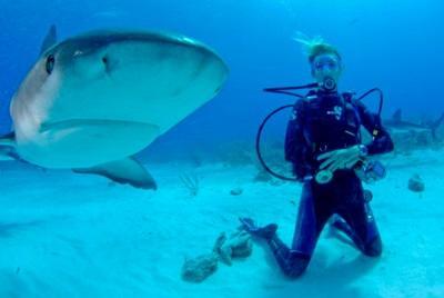 Onderzoek naar haaien